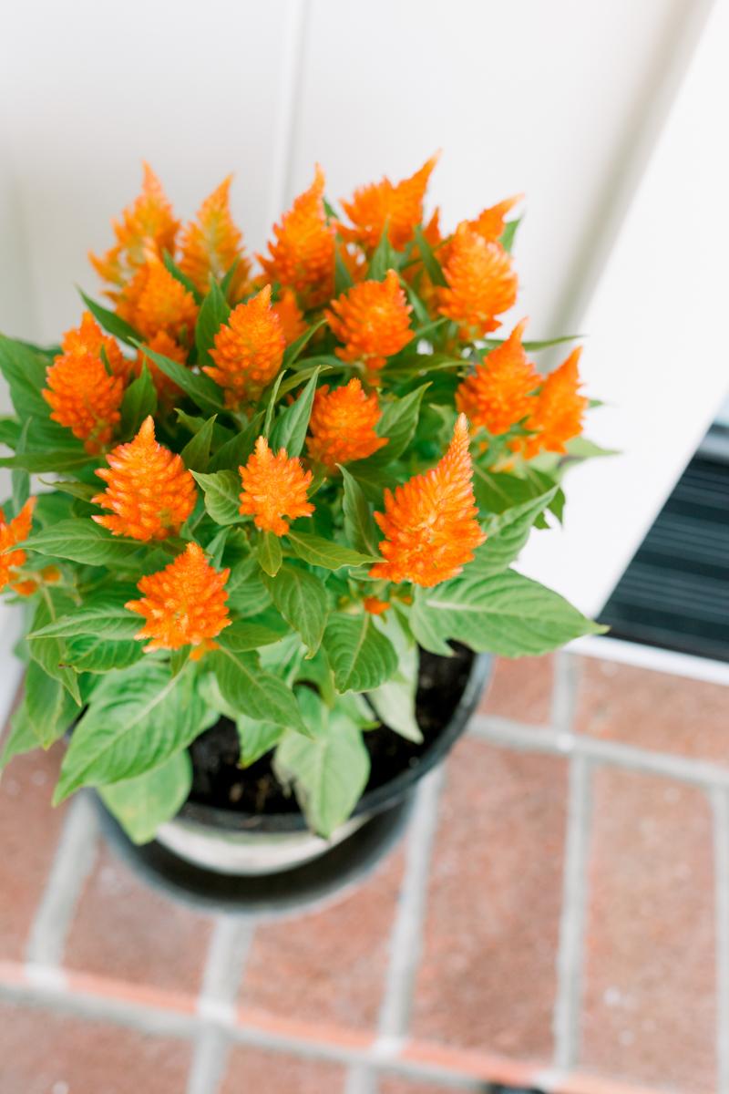 Bright Orange Fall Flowers