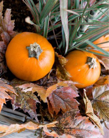 Pumpkins in Planter