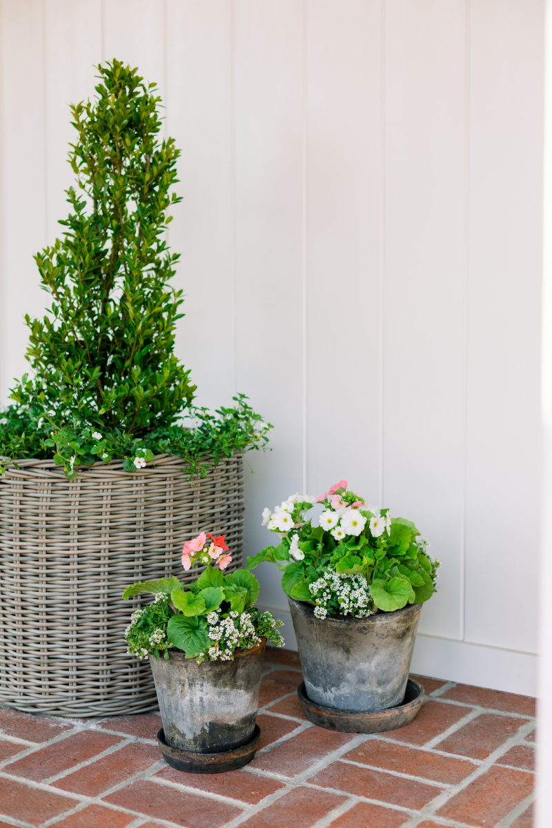 Woven basket topiary and potted plants
