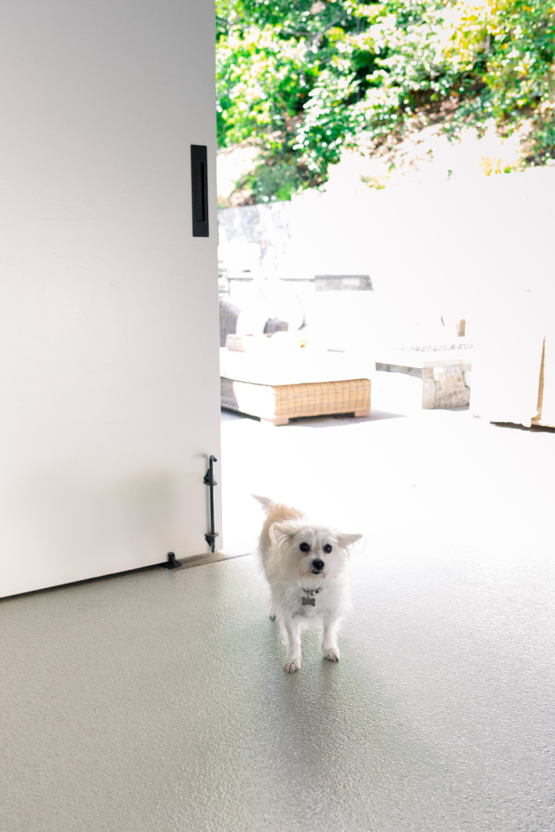 Dog in front of carriage doors