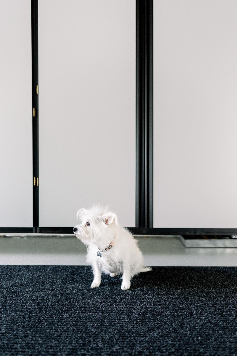 Dog in garage