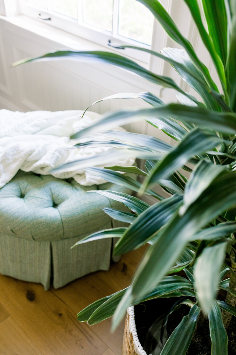 Round ottoman with throw and house plant