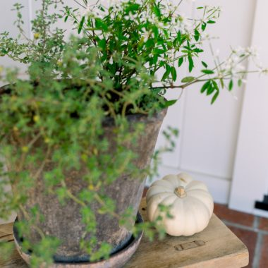 Herb pot and mini pumpkin